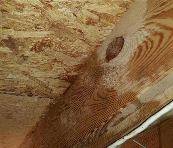 Moldy Crawl Space in Middle Tennessee Before